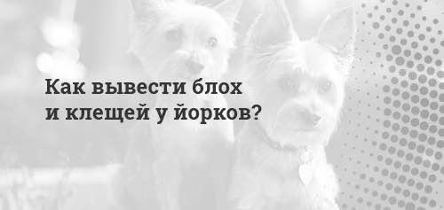 Как эффективно вывести блох у собаки в домашних условиях?