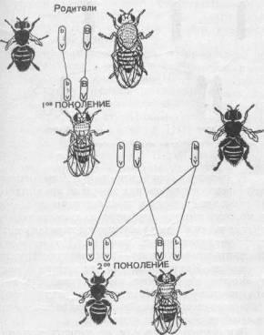 Самые большие тараканы в мире