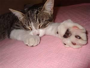 Укусила кошка: первая помощь, лечение и профилактика