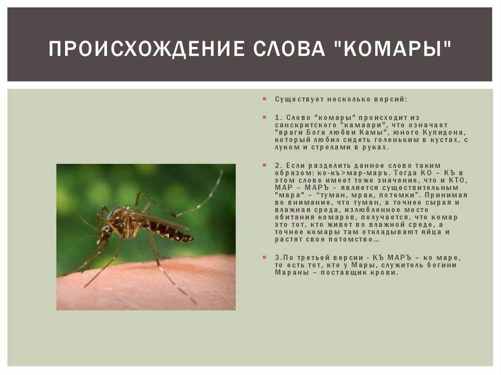 Как выглядит, как развивается личинка малярийного комара и опасна ли она для человека?
