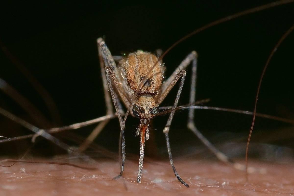 В россии может увеличиться количество малярийных комаров. с чем это связано?