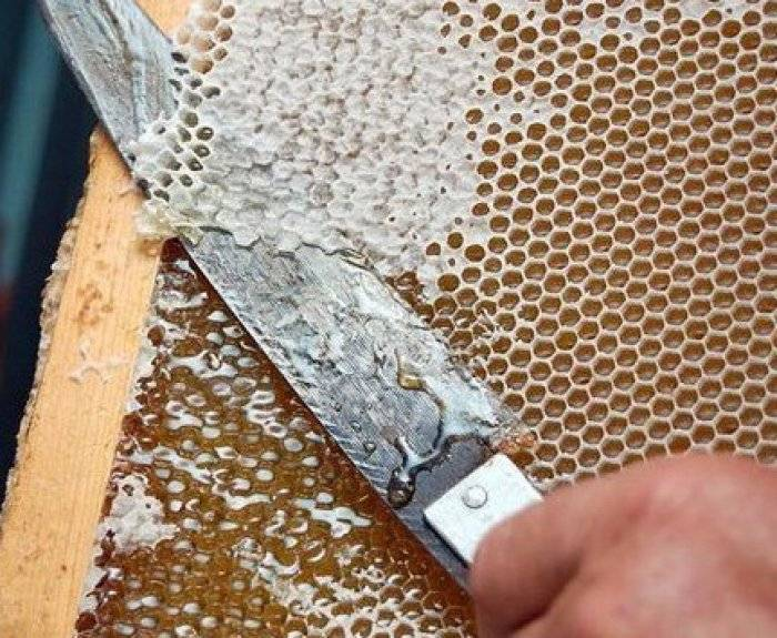 Состав пчелиного яда: польза и вред апитоксина