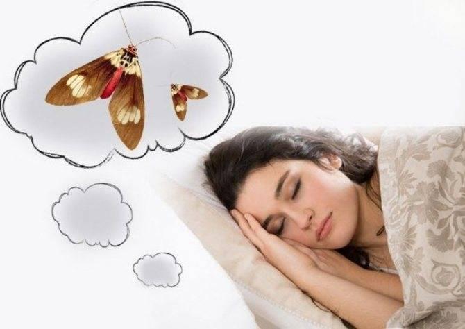 К чему снится моль?