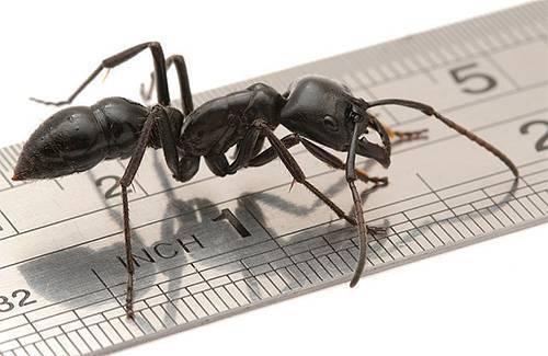 Сколько ног у насекомых? отвечаем на столь интересный вопрос. строение муравья: сколько лап у насекомого