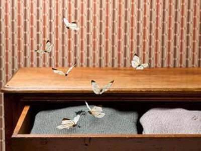 Как избавиться от моли в доме: обзор химических и народных средств