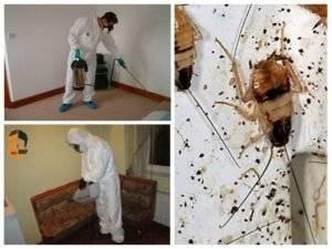 Как проводится дезинфекция от тараканов в квартире