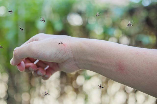 Почему чешется укус комара?