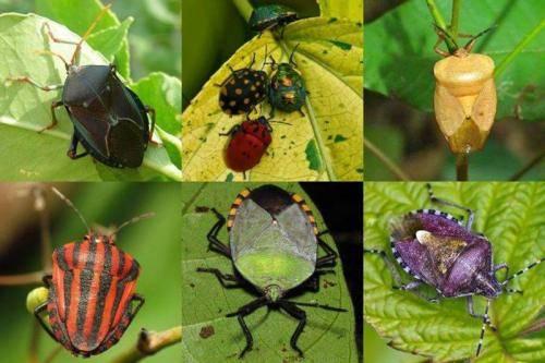 Народная примета «муха. причины появления больших мух в доме приметы про мух осенью в доме