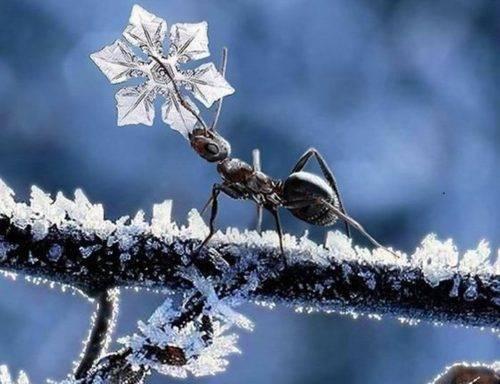 Как муравьи готовятся на зиму