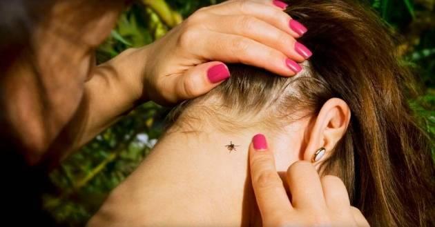 Признаки и симптомы энцефалита после укуса клеща у человека