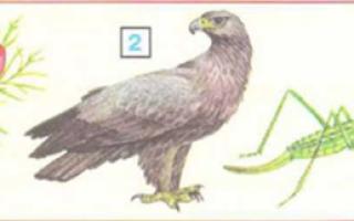 Дыбка степная кузнечик. образ жизни и среда обитания дыбки степной. дыбка степная: образ жизни и размножение хищного кузнечика степная дымка