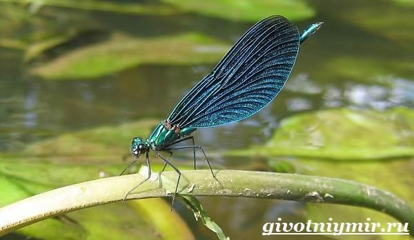 Эти удивительные стрекозы. что из себя представляют отряды насекомых: стрекозы, вши, жуки, клопы? является ли стрекоза насекомым