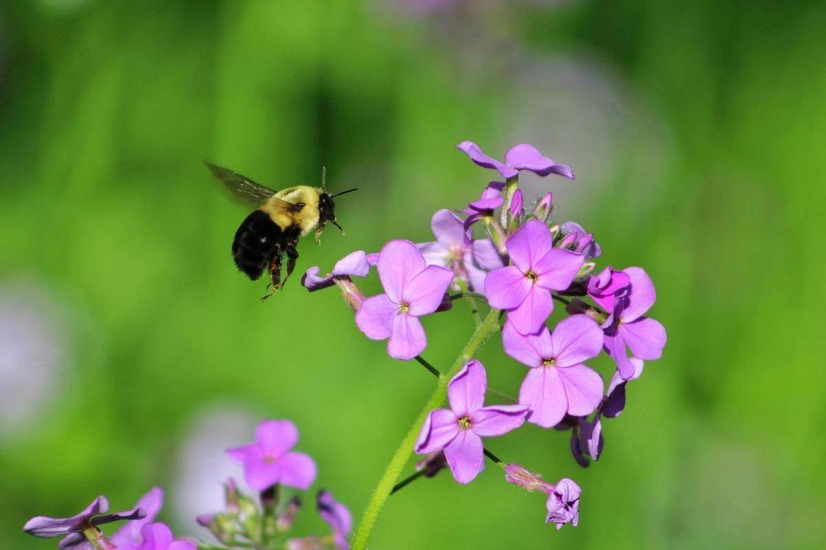 Вымирание пчел на планете земля