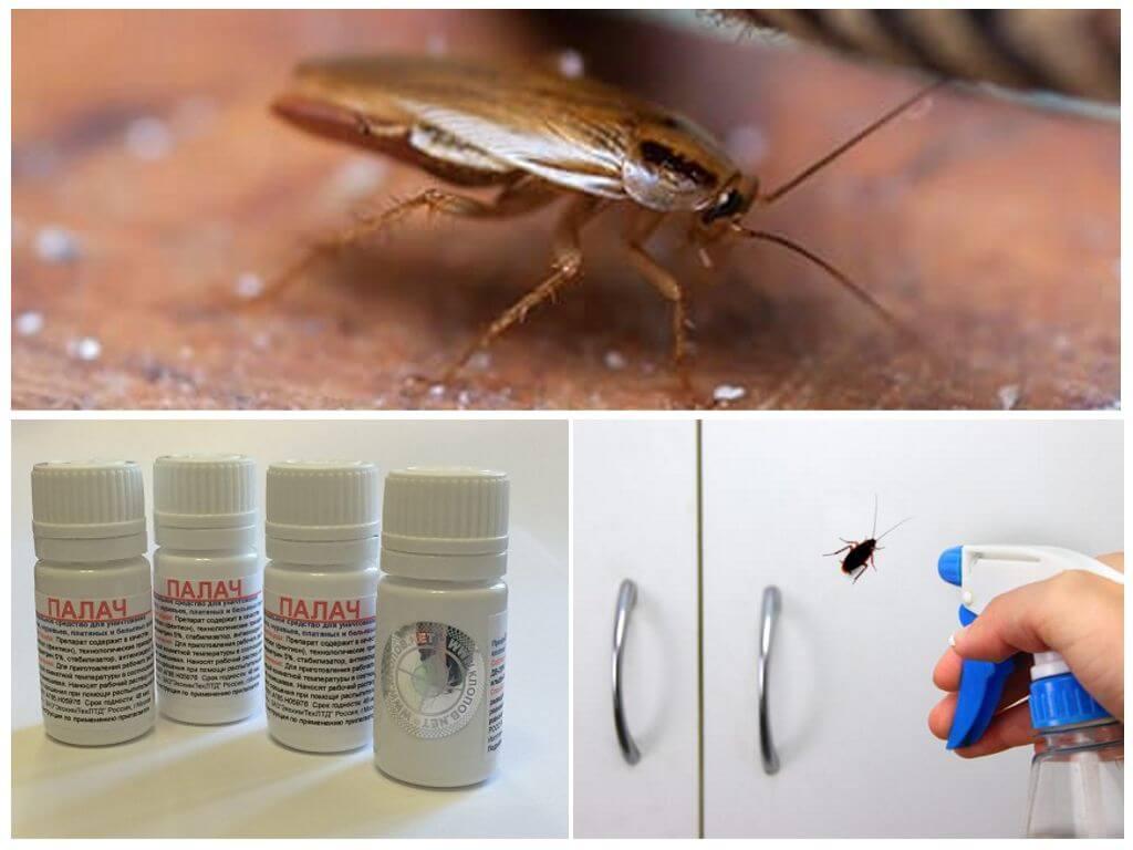 Казнить, нельзя помиловать! «палач» средство от тараканов с инструкцией