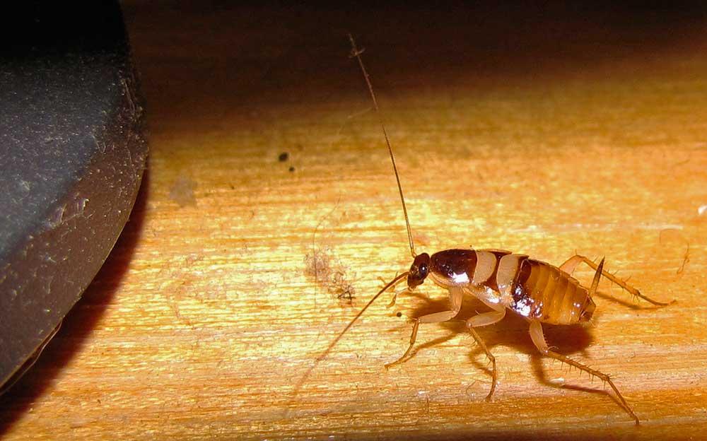Интересные факты о тараканах: изучаем во всех подробностях