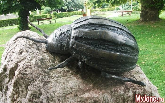 Знакомьтесь – колорадский жук