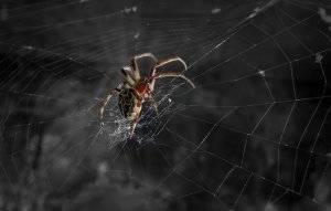 Этот паук плетет самую прочную паутину. в чем его секрет?