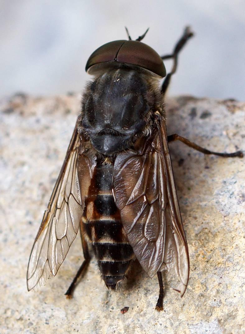 Зачем муха трет лапки и другие интересные факты о мухах