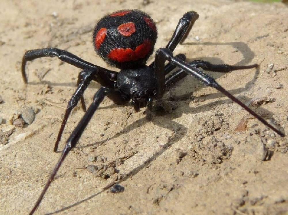 Виды пауков в россии: фото, названия и описание