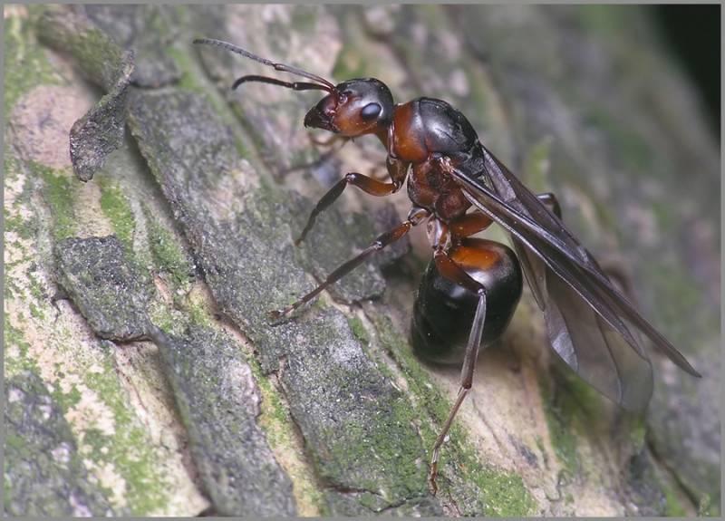 Разновидности муравьев россии и мира