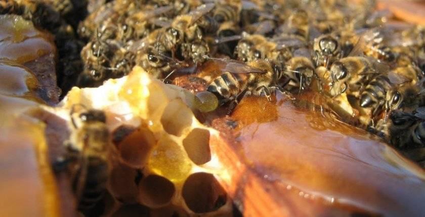 Как правильно организовать зимовку пчел на воле?