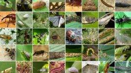 В саду жуки-долгоносики, как бороться с вредителем