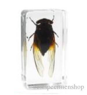 Описание и фото полосатой мухи похожей на осу