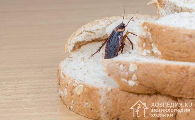 Средство от тараканов get: особенности применения