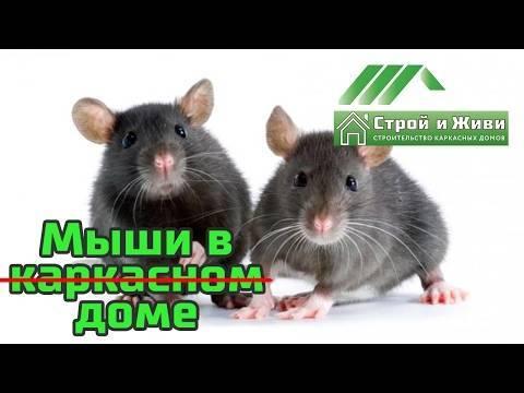 Как победить мышей в каркасном доме и не допустить их появления