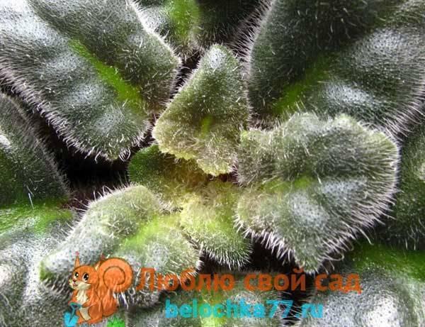Клещи в саду. описание и меры борьбы с клещами