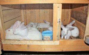 Защита кроликов от комаров — какие средства использовать и как лечить укусы