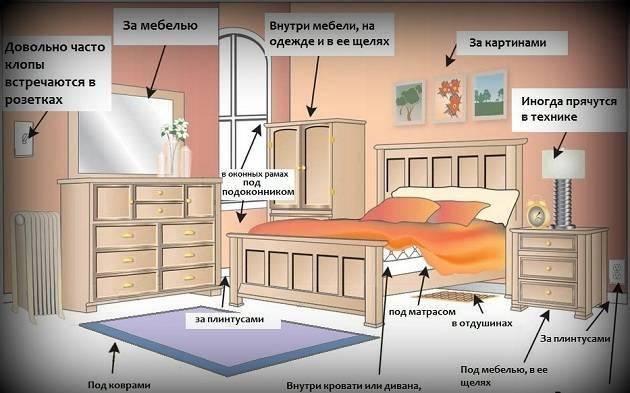 Уксус против постельных клопов: действенно или нет?