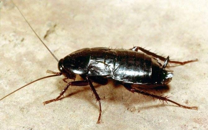 Почему тараканов называют «стасиками»: обзор версий и прозвищ