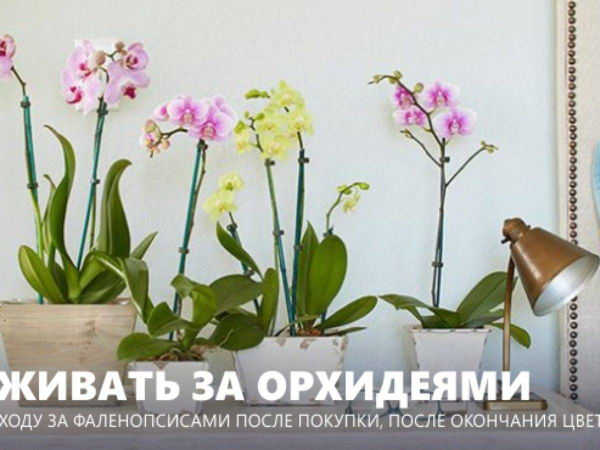 Как бороться с тлей на орхидее: эффективные методы борьбы с вредителем