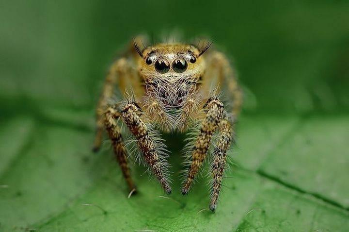 Сколько у муравья лап. сколько ног у муравьёв? трудовые будни лесных муравьев