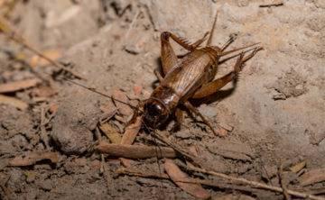 К чему снится насекомые?
