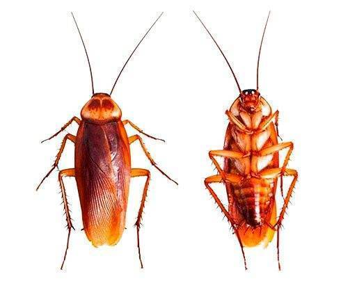 Почему тараканов называют стасиками: 4 версии