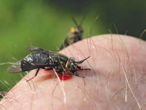 Что делать при укусе насекомого: как снять опухоль и покраснение