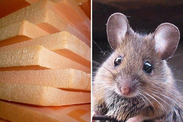 Грызут ли мыши пеноплекс: что делать, как защитить его от мышей?