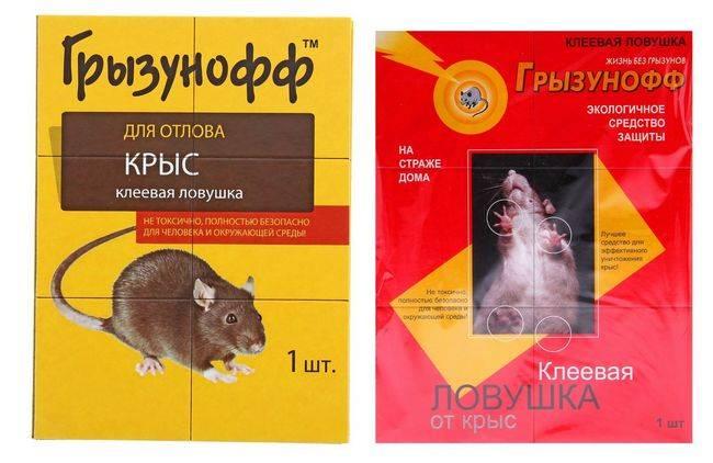 Лучшие ловушки от тараканов: клеевые, электронные и инсектицидные