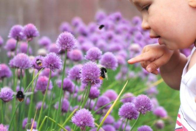 Что делать если покусала (ужалила) пчела или шмель?
