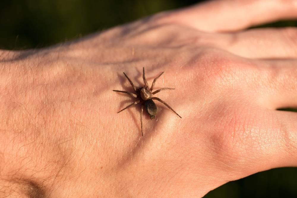 Как избавиться от маленьких паучков. эффективные средства избавления от пауков дома. народные отпугивающие средства - галерея