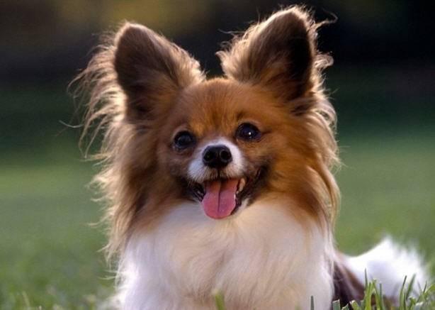 Что делать, если нашли клеща у собаки или кошки, и как защитить питомца