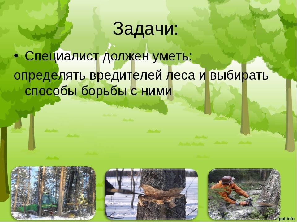 Сосновый коконопряд: методы борьбы с опасным вредителем хвойных деревьев