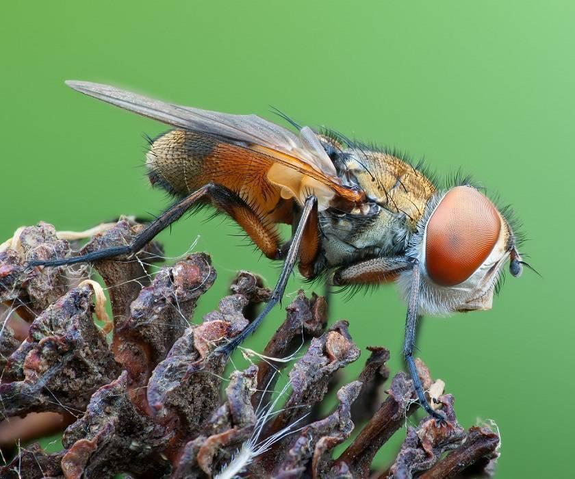 Приметы и суеверия про мух