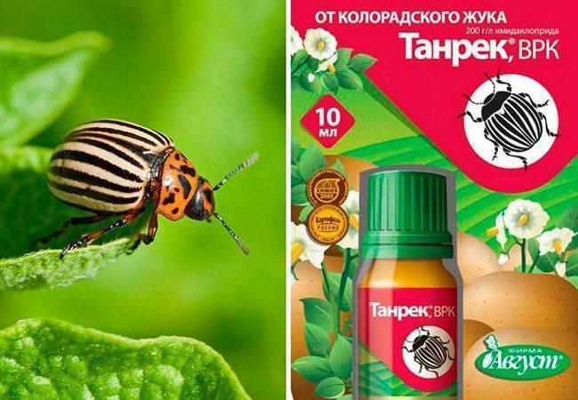 Инсектицид регент — инструкция по применению