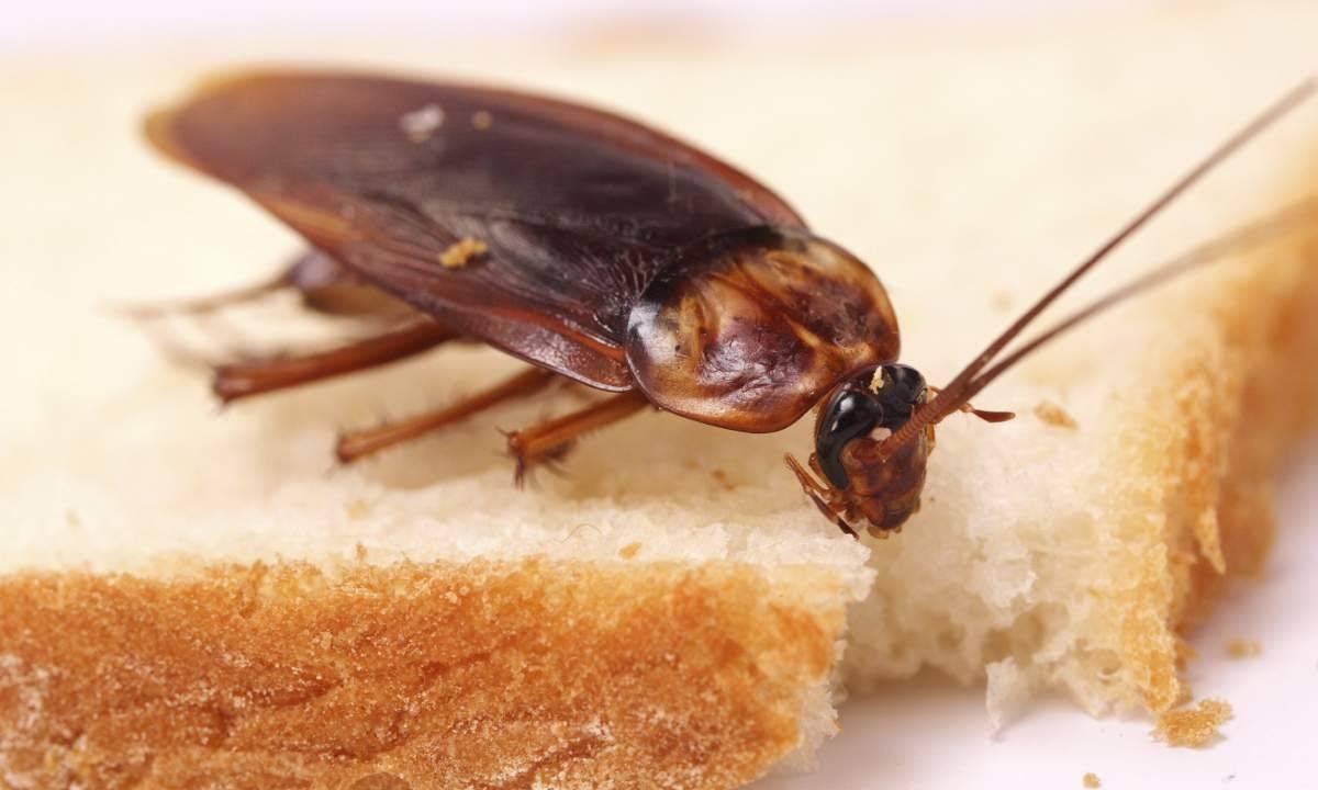 Сонник тараканы, к чему снятся тараканы во сне