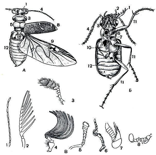 Содержание жука плавунца в домашних условиях: советы по обустройству аквариума и кормлению