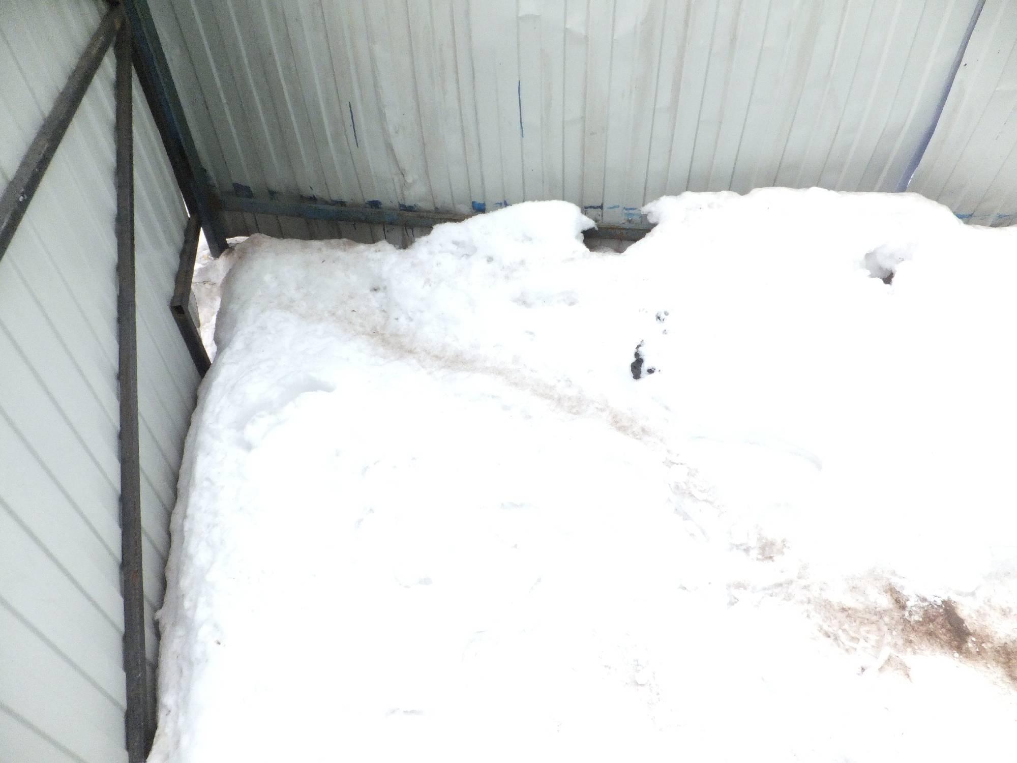 Как выглядят следы крысы на снегу. следопыт: читаем следы животных зимние следы на снегу