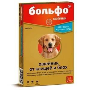 Как выбрать эффективный ошейник от блох для собаки